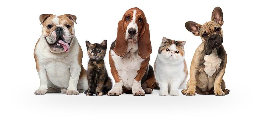 Картинки по запросу Услуги ветеринара