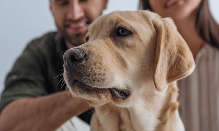 Средняя продолжительность жизни собак